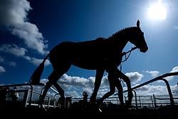Horses at Bath Races - Mandatory by-line: Robbie Stephenson/JMP - 04/09/2019 - PR - Bath Racecourse - Bath, England - Bath Races
