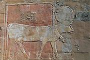 EGYPT, THEBES, WEST BANK Temple of Hatshepsut, Hathor (cow)