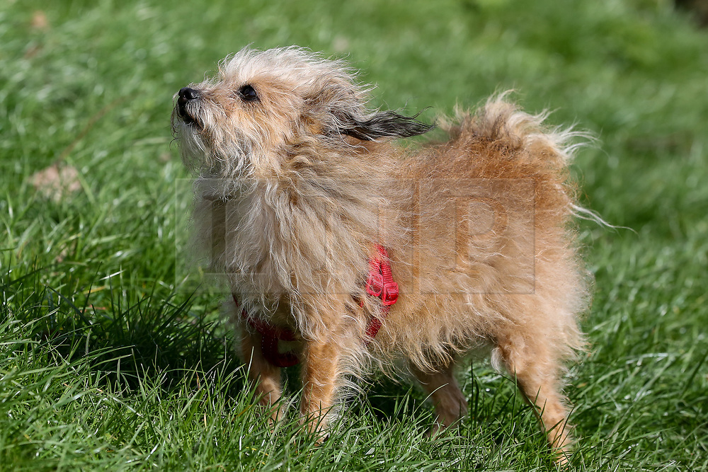 © Licensed to London News Pictures. 15/03/2019. London, UK. A dog in Finsbury Park, north London during strong winds. Photo credit: Dinendra Haria/LNP