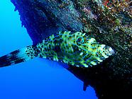 oahu :: underwater (2008)