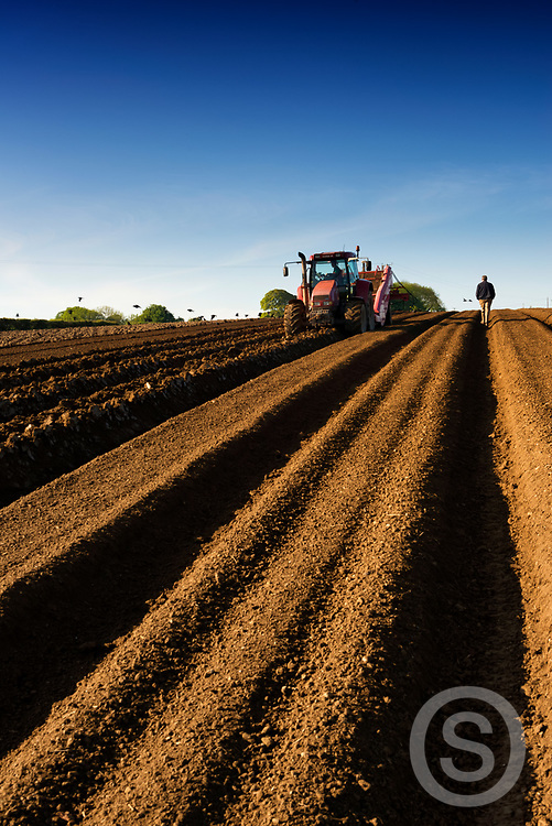 Photographer: Chris Hill, Potato Planting, Limavady, County Derry