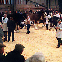 Scottish National Winter Fair 2000...22.11.2000.<br />