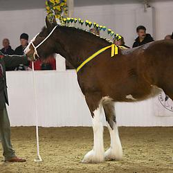 Mr J Worthington's Cumeragh Nancy May<br /> f 2012<br /> Sire Knutsford Edward The Second<br /> Dam  Loud Bridge Ruby<br /> Breeder  Mr L N Harrison