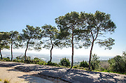 pine trees at Ramat Hanadiv is a nature park and garden covering 4.5 km at the southern end of Mount Carmel, Israel