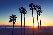 Palm Tree Silhouette at Sunset in Huntington Beach