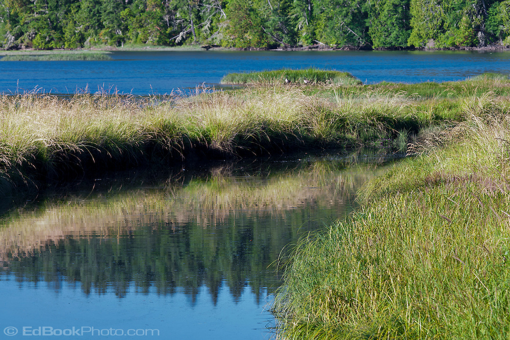 water reflections along the shore of Stavis Bay on the Hood Canal of Puget Sound, Washington, USA