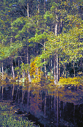 Sheldon (near Houston), Texas: small swamp near Sheldon Reservoir, typical of the Big Thicket area of East Texas.