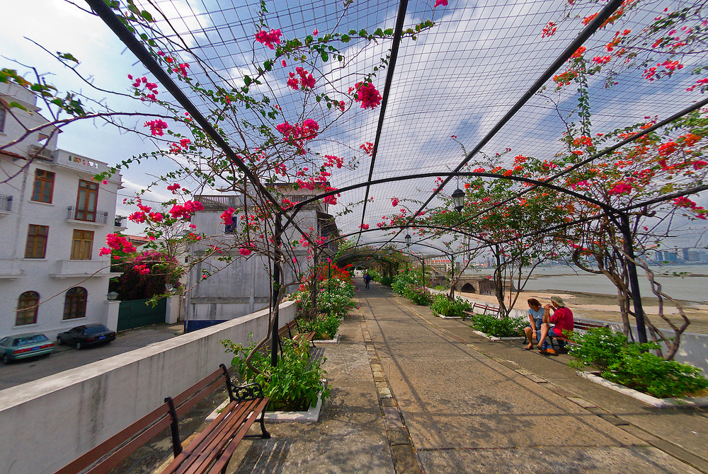 An arbor of Bougainvillea (flowering plants) on the Paseo de Las Bovedas, Casco Viejo (Old City), San Felipe, Panama City, Panama