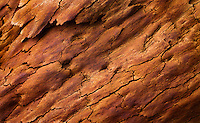 Detail and patterns in burnt bark on an Angophora tree (Angophora costata) scorched by recent bushfires, Wollemi National Park, NSW, Australia