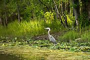 LaPlatte River Nature Preserve, Shelburne, Vermont.
