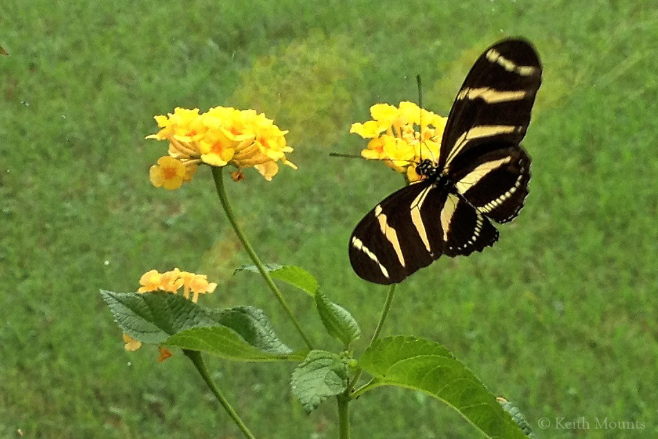Miracle: butterflies exists.Deeper miracle: anything exists.
