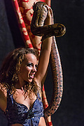 09 NOVEMBER 2013 - PHOENIX, AZ:   A belly dancer performs with a snake at the 7th annual Phoenix Annual Parade of the Arts. The arts walk/parade started in 2006 and now draws hundreds of people in downtown Phoenix.    PHOTO BY JACK KURTZ
