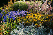 An autumn border of asters and rudbeckia at Nymans Gardens, Handcross, West Sussex, UK