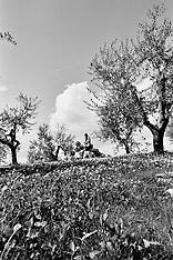 Italy-Tuscano-Carmignano-Castelvecchio Vineyard-Family