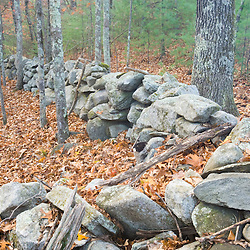 An old stone wall in the forest in Dunstable, Massachusetts.