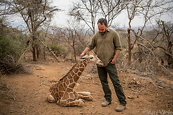 """Dave Matthews (@davematthewsband) meets """"Shorty"""" or """"Fupi"""" in Swahili, one of the orphaned reticulated #giraffes being cared for by the team at the Reteti Elephant Sanctuary (@r.e.s.c.u.e) where he will be rehabilitated and returned to the wild. Sarara has already returned three giraffes to the wild recently but each time a new orphan arrives, out of the blue, the former orphans, who are all grown up and living in the wild, come back to the sanctuary to greet the new orphans as soon as they arrive. They must have some way of communicating and knowing these babies are there.<br /> <br /> Reteti Elephant Sanctuary, in northern Kenya is the first ever community-owned and run elephant sanctuary in Africa. The sanctuary provides a safe place for injured elephants to heal and later, be returned back to the wild. You can support this incredible place and the people who protect wildlife. Make a $10 contribution in support of Reteti for a chance to win a trip to Kenya, see Dave Matthews in concert and take home Dave's guitar with @prizeo (Link in profile). Not only will you be helping care for orphaned baby elephants and strengthening community ties, you'll also have a chance to win a life-changing trip to see the sanctuary in person. The first $10,000 in funds raised will be generously matched by Elephant Gems (@elephantgems).<br /> <br /> Reteti operates in partnership with Conservation International (@conservationorg) who provide critical operational support and work to scale the Reteti community-centered model to create lasting impacts worldwide. <br /> <br /> Photo by @amivitale."""