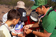 Herpetologist Bob Drewes shows the group how to tell the sex of a horned lizard, Chiricahua Mountains, Arizona..Media Usage:.Subject photograph(s) are copyrighted Edward McCain. All rights are reserved except those specifically granted by McCain Photography in writing...McCain Photography.211 S 4th Avenue.Tucson, AZ 85701-2103.(520) 623-1998.mobile: (520) 990-0999.fax: (520) 623-1190.http://www.mccainphoto.com.edward@mccainphoto.com.