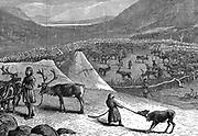 Lapps encampment with reindeer corral. Nomadic herdsmen of Arctic regions whose reindeer provided food, clothing, tools and transport,  Wood engraving, 1882.