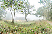 World War I trenches, Berkhamsted Common. During World War I, Berkhamsted and the surrounding area served as a training ground for The Inns of Court Officer Training Corps. Today you can still see remains of the 12 km of practice trenches dug by recruits.