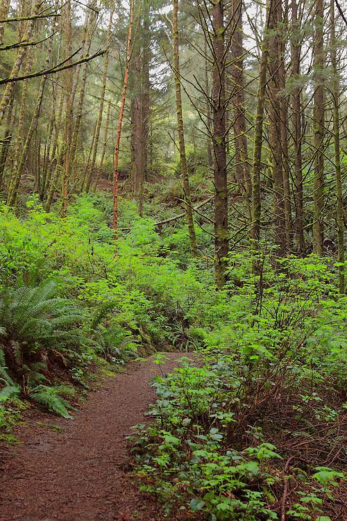 Thomas Creek Trail - Oregon Coast