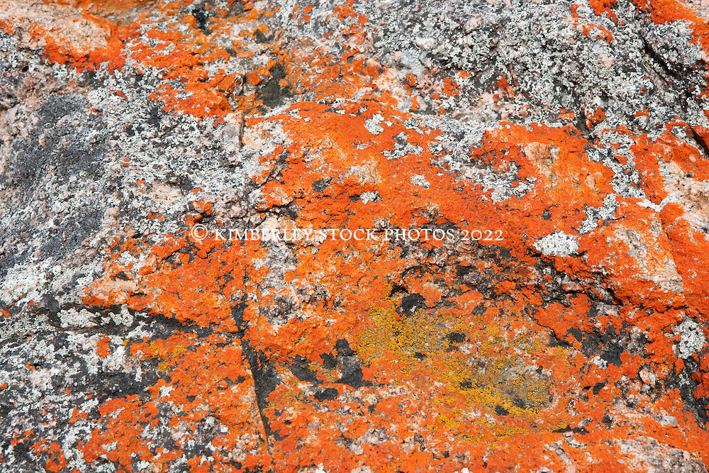Orange lichens at Coles Bay on the east coast of Tasmania