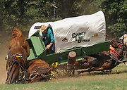 A chuckwagon rider with the team Co. Line Bunch from Perry, AR, tips in his wagon as his horses fall on a sharp turn during the 30th Annual National Championship Chuckwagon Race in Clinton, AR on September 4, 2015. Horses in the trailing wagon from team 7X, from Springfield, AR, also fell when running into the wreck. All horses and riders recovered from the accident without major injury. (Benjamin Krain/Arkansas Democrat-Gazette)