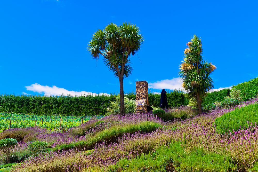 Mudbrick Vineyard, Oneroa, Waiheke Island, Hauraki Gulf, near Auckland, New Zealand