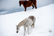 Horses, winter, Montana, Property Released