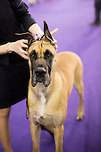 16.02.16 - Westminster Kennel Club