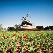 The tulip garden in front of the Navy-Merchant Marine Memorial in Arlington, Virginia, on Columbia Island on the banks of the Potomac across from Washington DC. The memorial honors those who lost their life at sea in World War I and was dedicated in 1934. The main sculpture is cast from aluminum.