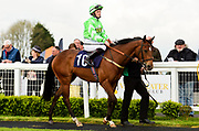 "Ever Rock ridden by Rhian Ingram and trained by J S Moore in the ""Around The Paddock"" At Valuerater.Co.Uk Handicap race.  - Mandatory by-line: Ryan Hiscott/JMP - 01/05/2019 - HORSE RACING - Bath Racecourse - Bath, England - Wednesday 1 May 2019 Race Meeting"