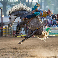 2017 Rodeo Photography