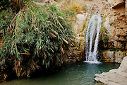 Israel, Dead Sea Ein Gedi national park the lower waterfall in Wadi David