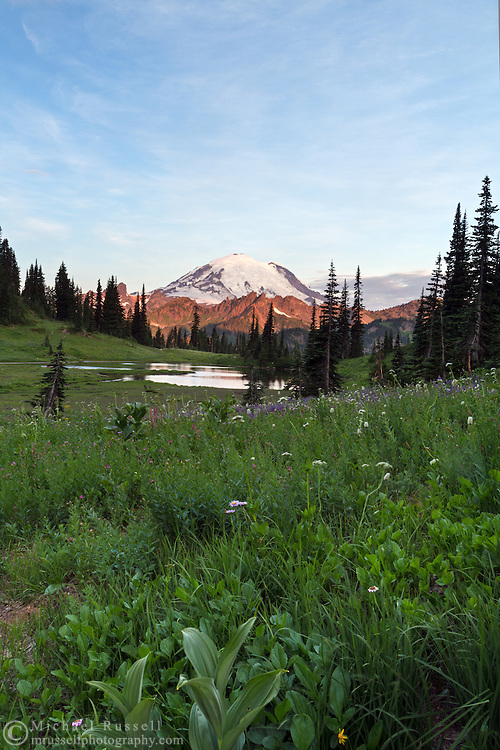 Early morning light on Mount Rainier from Upper Tipsoo Lake in Mount Rainier National Park, Washington State, USA