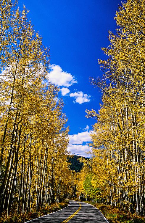 Fall foliage, Independence Pass, Colorado USA