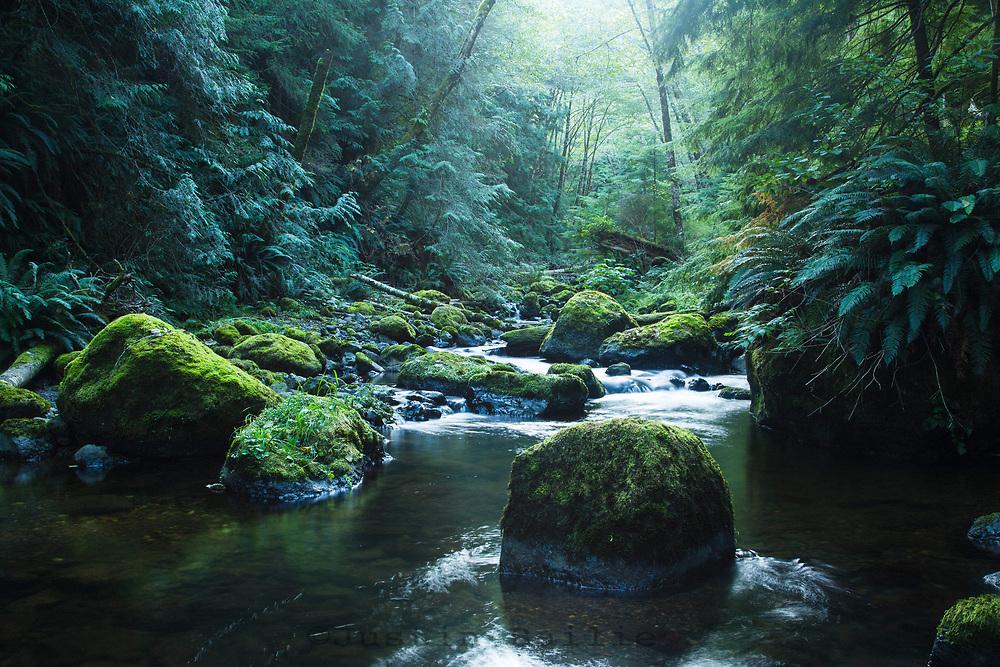 Small stream along the Oregon Coast.