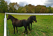 Hummelstown, Dauphin Co., PA, rural horse farm