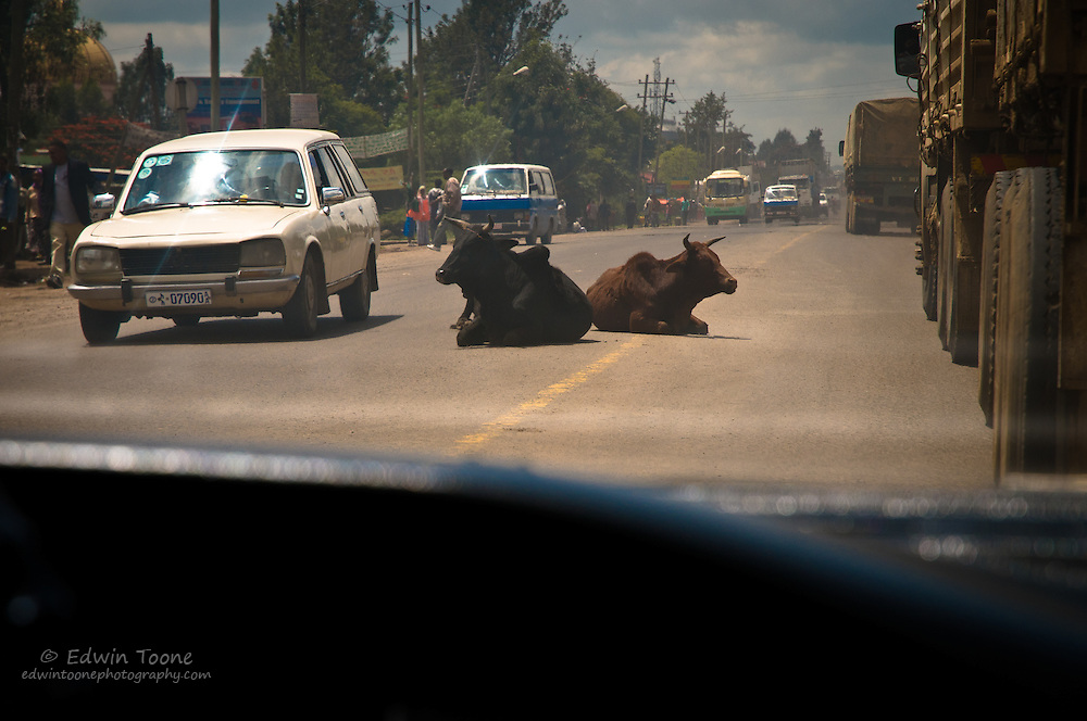 The main road out of Addis is full of transport trucks headed south and the occasional cow in the middle of the road.