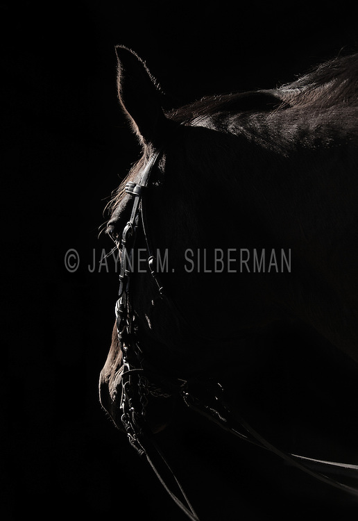 Sidelit horse silhouette.