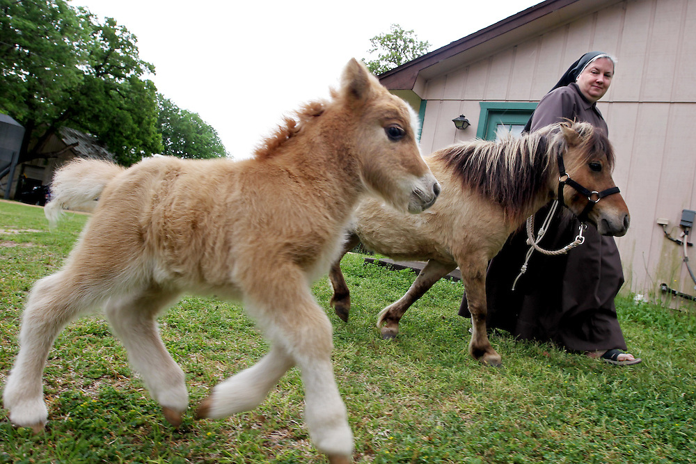 Sister Angela walks a mare with her newborn foal out to the pasture for the first time April 7, 2010.