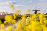 Windmühle mit Blumen, Holland