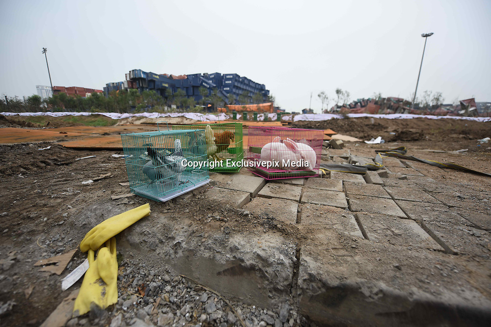 TIANJIN, CHINA - AUGUST 21: (CHINA OUT) <br /> <br /> Animals Have Put Into Blasts Scene To Detect Quality Of Life<br /> <br /> Animals in cages are put at blasts scene to detect whether lives could be existed here in the future in Tianjin Binhai explosion site on August 21, 2015 in Tianjin, China. Tianjin massive explosion in Wednesday night had killed 116 people, and there being still another 60 in missing, officials said. The blasts site were in cleaning and inspection and animals had been sent to check quality of life.<br /> ©Exclusivepix Media