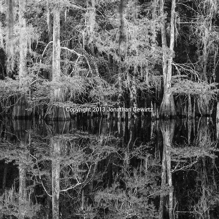 Black & white reflections of the cypress forest on the lake at Ingram Crossing on Fisheating Creek in Florida's Fisheating Creek Wildlife Management Area. WATERMARKS WILL NOT APPEAR ON PRINTS OR LICENSED IMAGES.