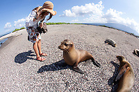 Young woman looking at Galapagos Sea Lions on beach in the Galapagos Islands, Ecuador.