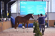 2013-02-eurohorse