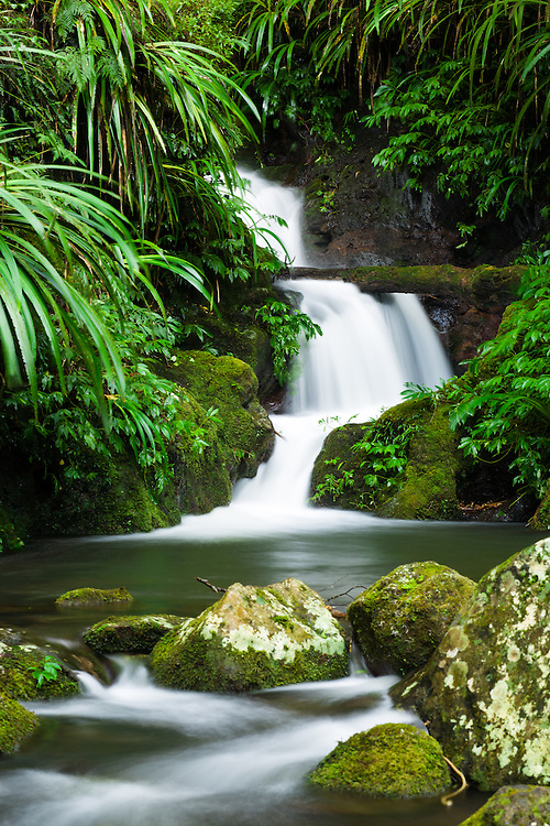 Burraboomba Falls. One of many pristine falls along the Toolona Creek Circuit, Lamington National Park.