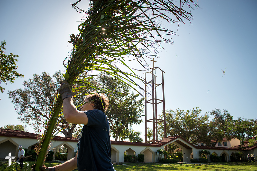 Jack Proctor, director of Christian education at Saint Michael Lutheran Church, Fort Myers, Fla., removes fallen palm fronds leftover from Hurricane Irma at Zion Lutheran Church on Wednesday, Sept. 13, 2017. LCMS Communications/Erik M. Lunsford