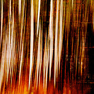 Colorful abstract alluding to an aspen grove with strong vertical elements in fiery orange and brown colors