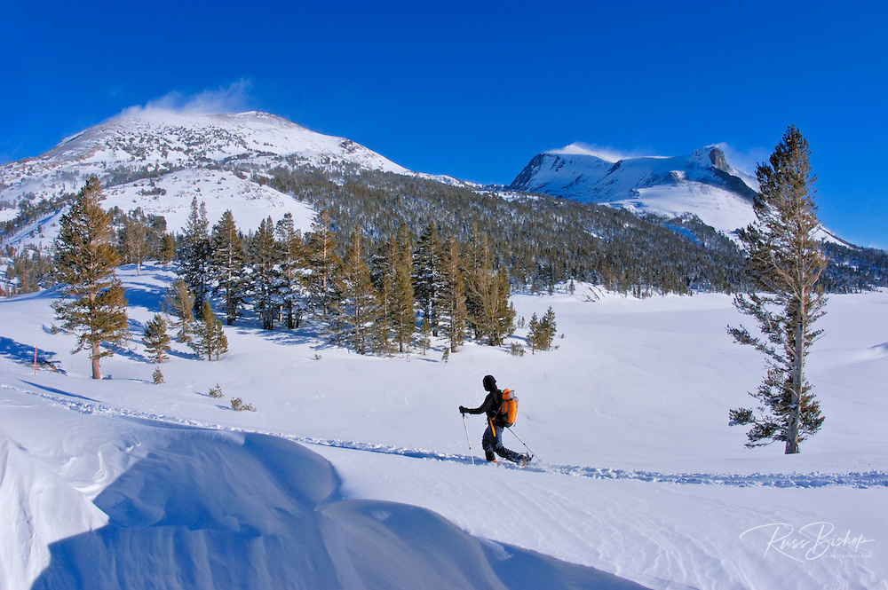 Backcountry skier on the Tioga Pass road (Highway 120) under Mount Dana, Inyo National Forest, Sierra Nevada Mountains, California