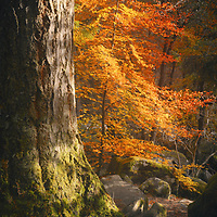 By the river Braan at the Hermitage, Dunkeld.